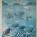 WWF Sea Turtle Chart