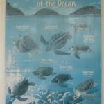 WWF Sea Turtle Chart