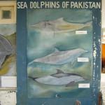 WWF Dolphins of Pakistan