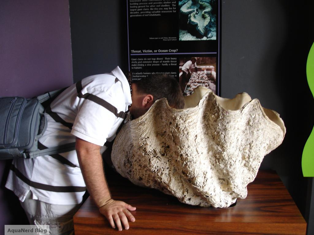 Waikiki Aquarium Giant Clam