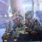 Plenty of Corals Available at the Frag Swap