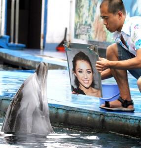 Dolphin Studies Miley Cyrus