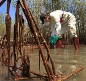 Marshlands Covered in Oil