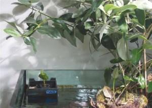 Tunze Mangrove Box with Black Mangrove