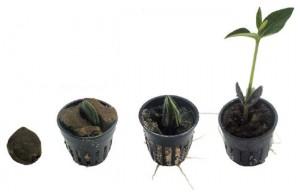 Tunze Black Mangroves