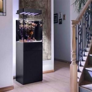 Ecoxtic 25 Gallon LED Aquarium in a Home Setting