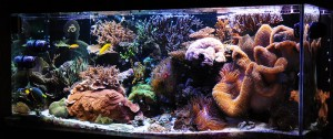 Melev's 280 gallon Reef Tank
