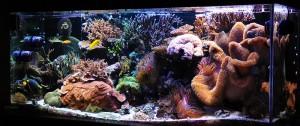 Melev's 280 gallon Reef Tank