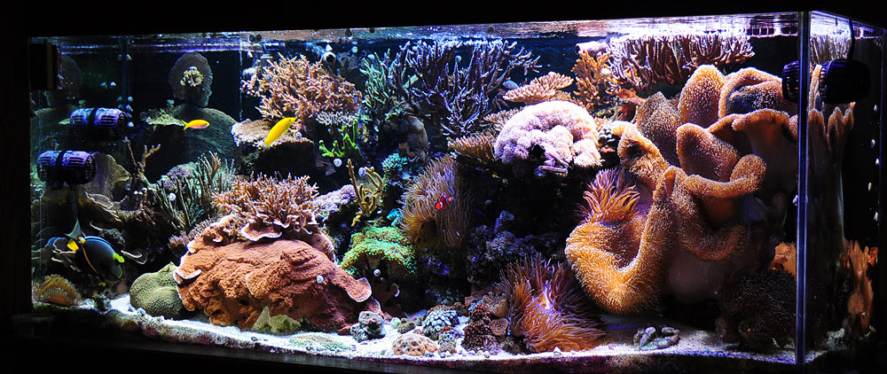 Melev 39 s reef tank it 39 s leaking aquanerd for How to fix a leaking fish tank