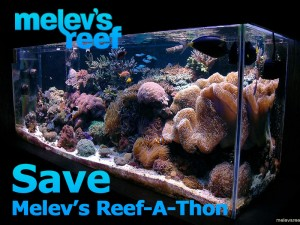 Melev's Reef-A-Thon