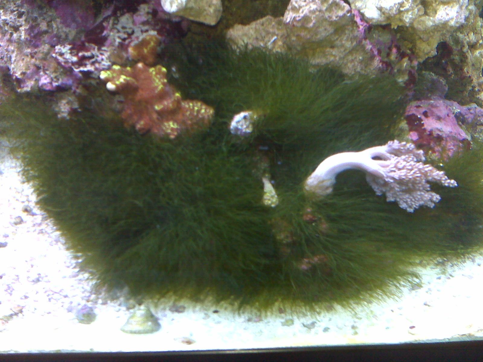 Display Aquarium with Algae