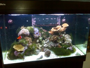 Display Aquarium with Algae