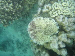 Bleached Corals in the Philippines