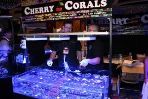 Cherry Corals with Aqua Illumination LED