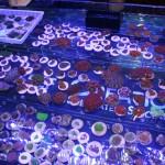 Coral Frags at MACNA