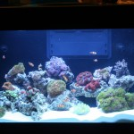 Display Reef Aquarium at MACNA