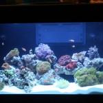 Display Reef Aquarium at MACNA