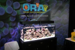 Ecoxotic Panorama Fixtures at ORA Display