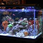 Rimless Reef Aquarium at MACNA