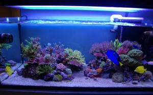 Sonny's Rimless Reef
