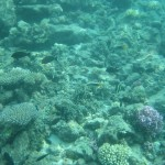 Reefs Surrounding Kwajalein