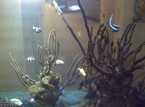 Live Saltwater Aquarium Cam Show