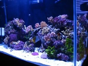 Reef Aquarium in the Marshall Islands
