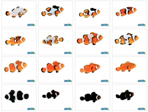 Collection of ORA Fish as seen on the ORA Facebook Page