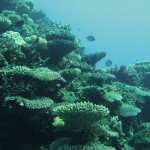 Coral Reef Photos