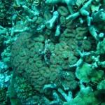 Diving in Kwajalein