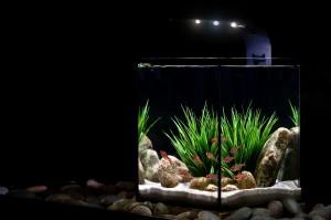 Ecoxotic EcoPico Aquarium