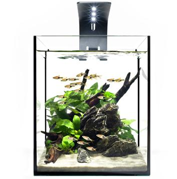 Ecoxotic EcoPico Aquarium Setup