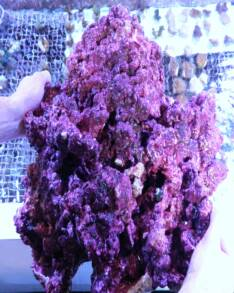 Fish Heads Inc Real Reef Live Rock