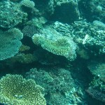 Hard Corals on Reef