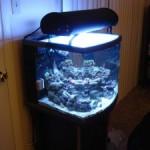 Modified JBJ Nano Cube Aquarium