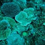 SCUBA Diving Marshall Islands