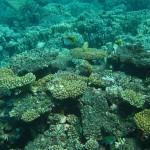 SCUBA Diving Reef Photos