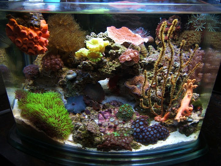 Even the tiniest aquariums can make spectacular reefs for Saltwater fish for 10 gallon tank