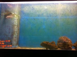 Aquarium Picture from Super Pet World