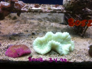 Aquarium Picture from Super Pet World