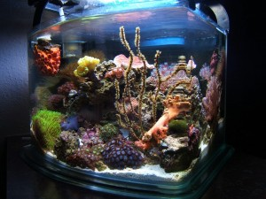 Pico Aquarium With Corals
