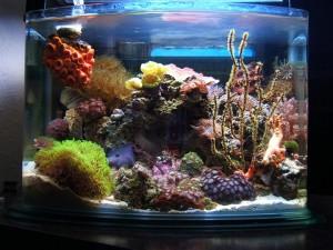 Pico Reef Aquarium