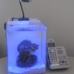 Skimz Ibox Aquarium