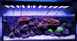 Ecoxotic Panorama LED Reef Tank After