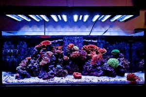 Ecoxotic Panorama LED Reef Tank Before