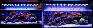 Ecxotic LED Reef Tank Before and After