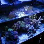 Natural Seawater Reef Aquarium
