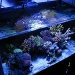 Natural Seawater Reef Aquarium