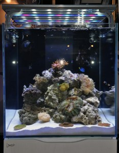 Sfiligoi Genesis Modular LED Fixture Over Cube Tank