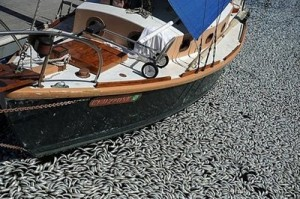 California Fish Kill